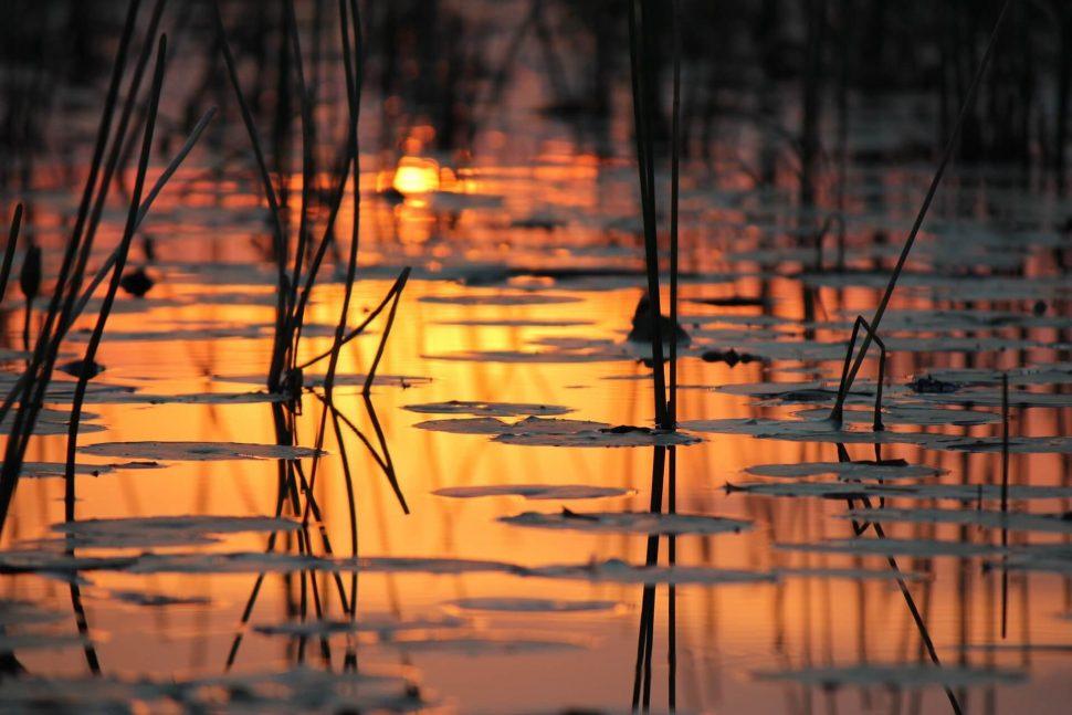 okavango delta river