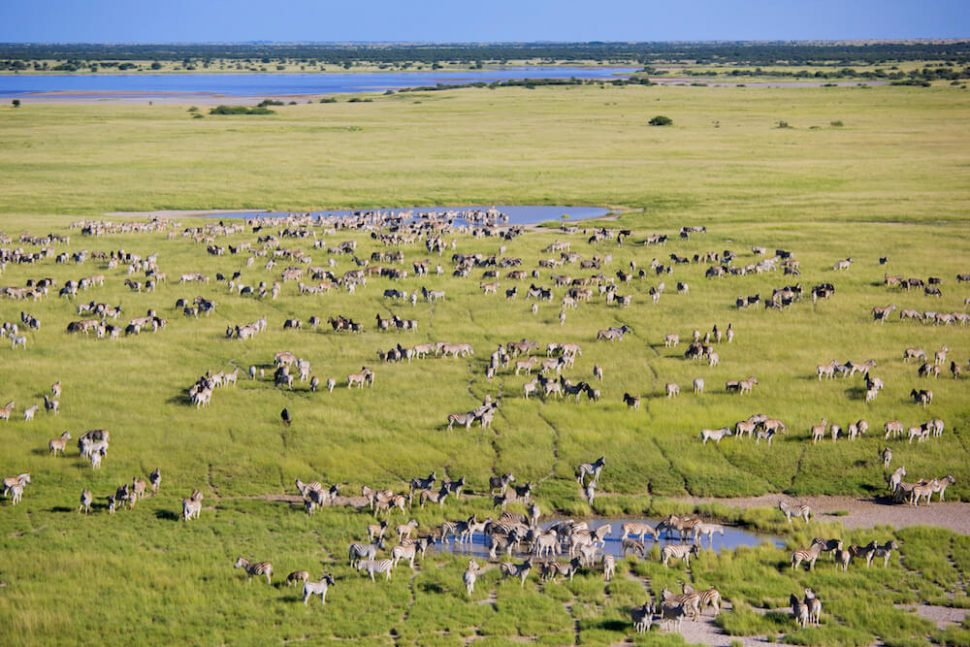 planet baobab zebra migration